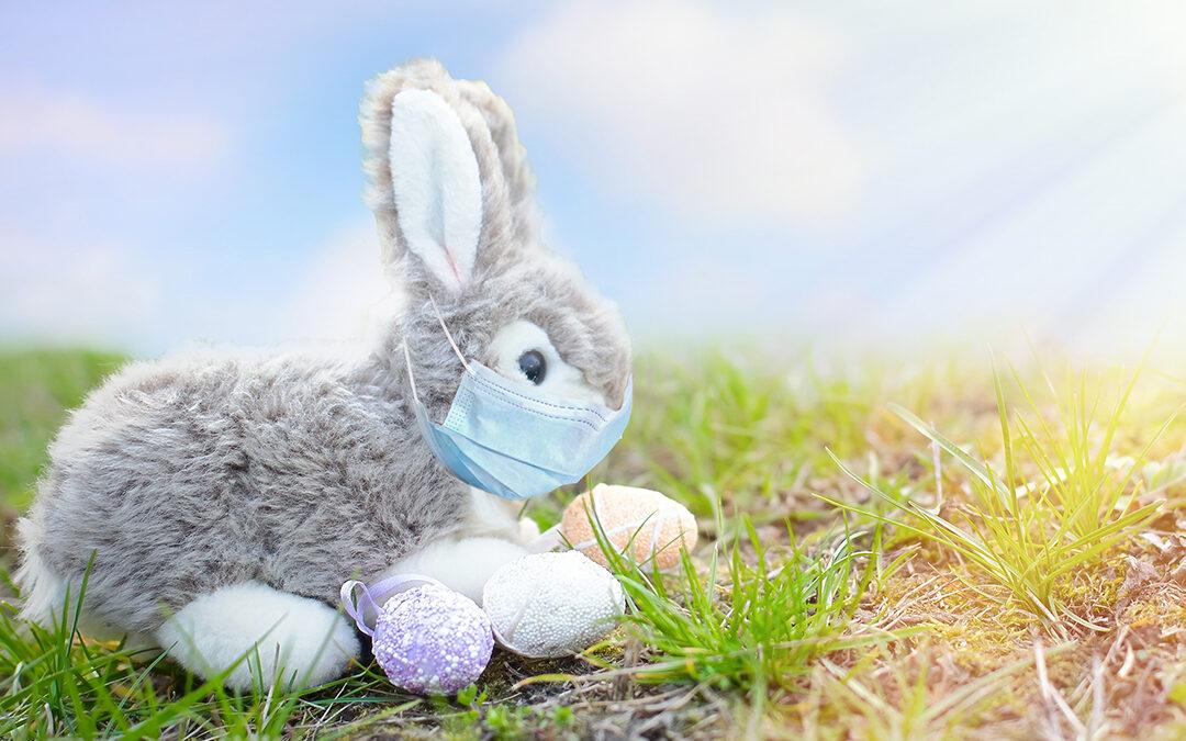 Årets stora påskäggjakt! Vinn en egen kanin*!